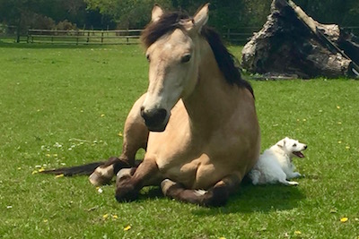 Biscuits and Patch chilling!